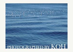 photograph by koh_ポートフォリオ6